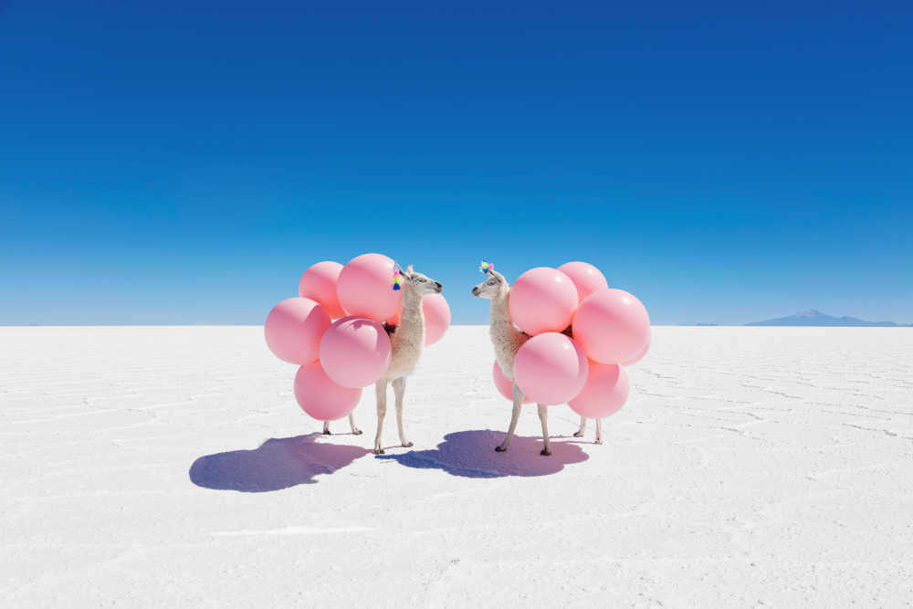 Two-Llamas-with-Pink-Balloons